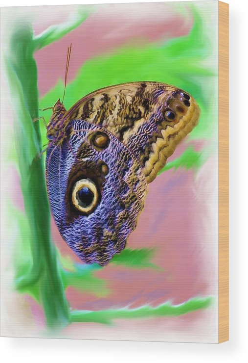 Butterfly Wood Print featuring the photograph Brown And Blue Butterfly 2 by Jim Darnall