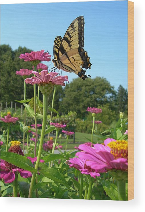Longwood Gardens Wood Print featuring the photograph Butterfly Beauty by Sheila Rodgers