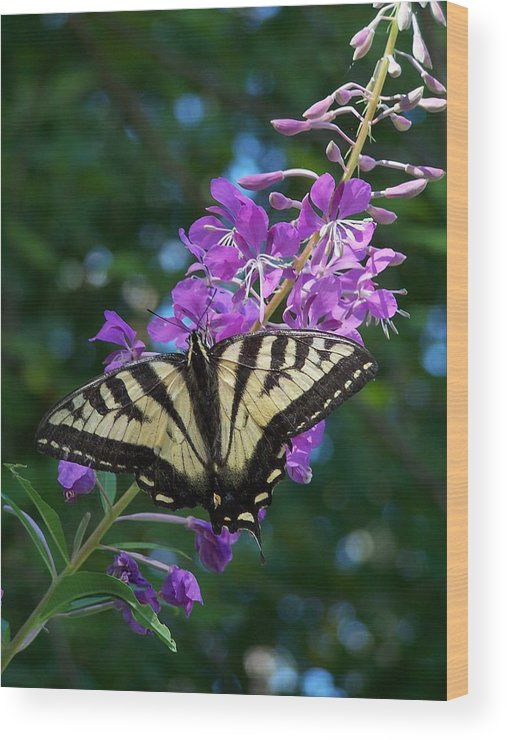 Butterfly Wood Print featuring the photograph Butterfly by Gene Ritchhart