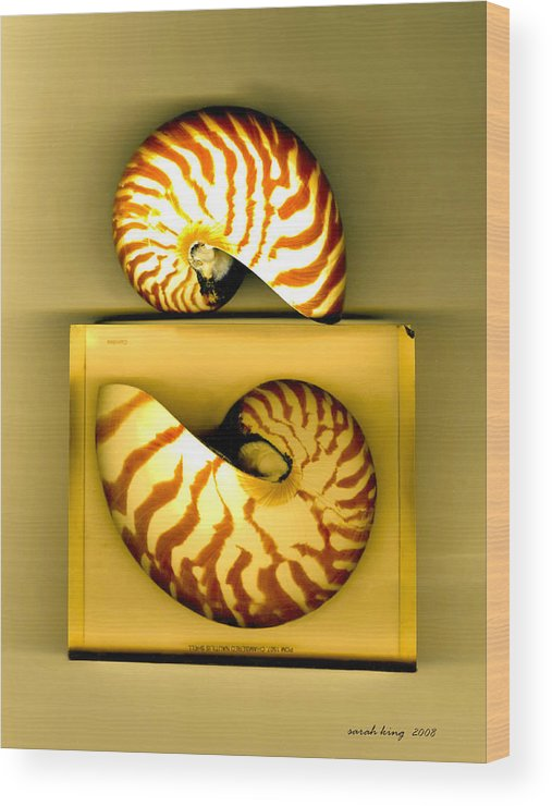 Photogaraphy Digital Shells Sea Endangered Species. Wood Print featuring the photograph Captured And Free by Sarah King