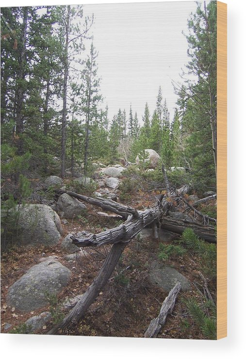 Landsscape Wood Print featuring the photograph Colorado Trees by Lisa Gabrius