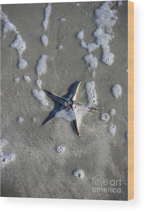 Nature Wood Print featuring the photograph Creatures Of The Gulf - A Fallen Star by Lucyna A M Green