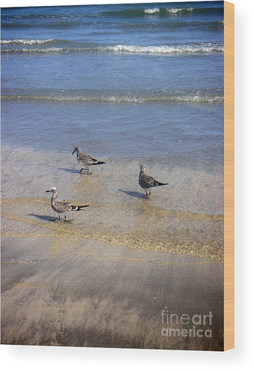 Nature Wood Print featuring the photograph Creatures Of The Gulf - Morning Walk by Lucyna A M Green