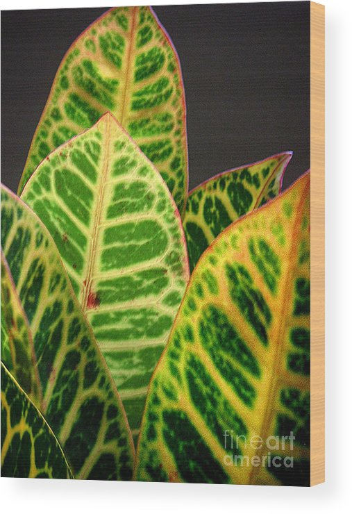 Nature Wood Print featuring the photograph Croton Leaves In Profile by Lucyna A M Green
