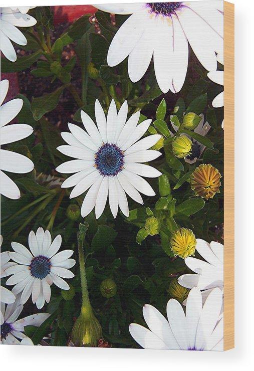 Daisy Wood Print featuring the photograph Daisy Forms by Caroline Urbania Naeem