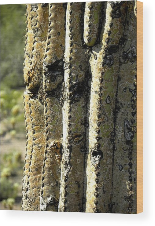 Photograph On Paper Wood Print featuring the photograph Desert Cactus 6 by Patricia Bigelow
