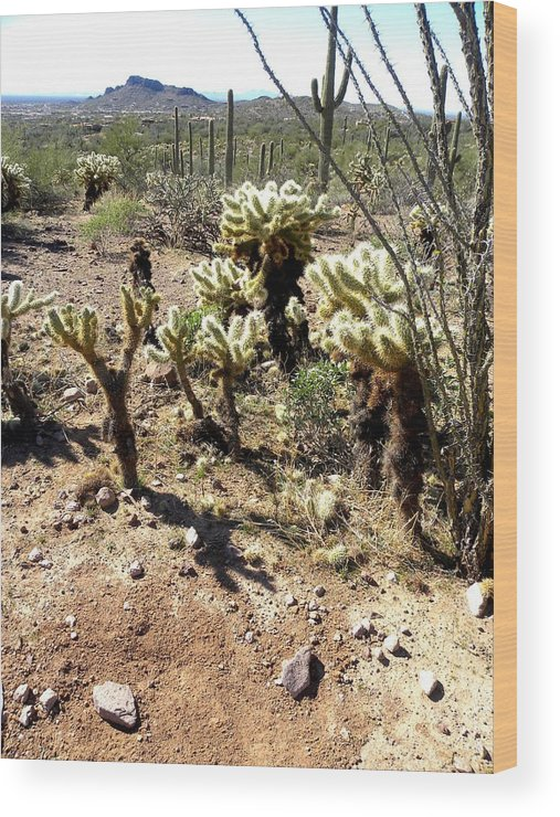 Photogaph On Paper Wood Print featuring the photograph Desert Cactus 7 by Patricia Bigelow