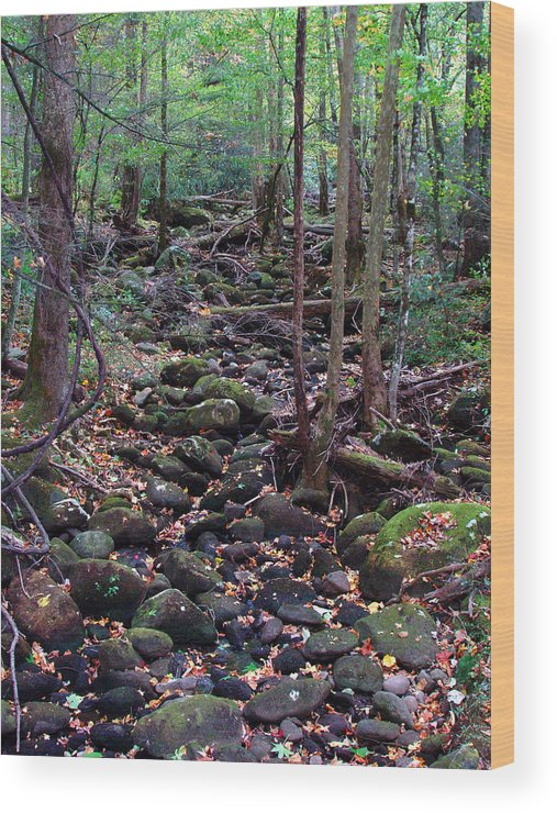 River Wood Print featuring the photograph Dry River Bed- Autumn by Nancy Mueller
