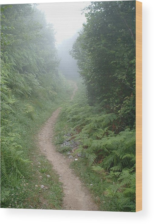 Camino Santiago Pilgrimage Spiritual Spain Pathway Wood Print featuring the photograph El Camino De Santiago by Lara Henderson