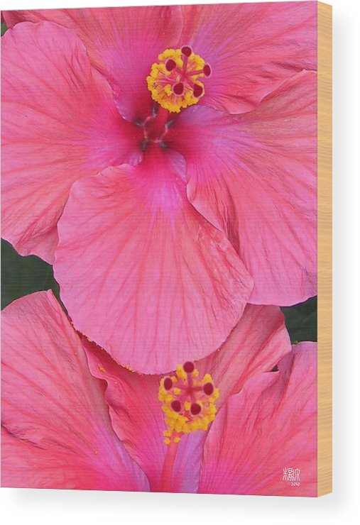 Flowers Wood Print featuring the photograph Escutcheon by Michele Caporaso