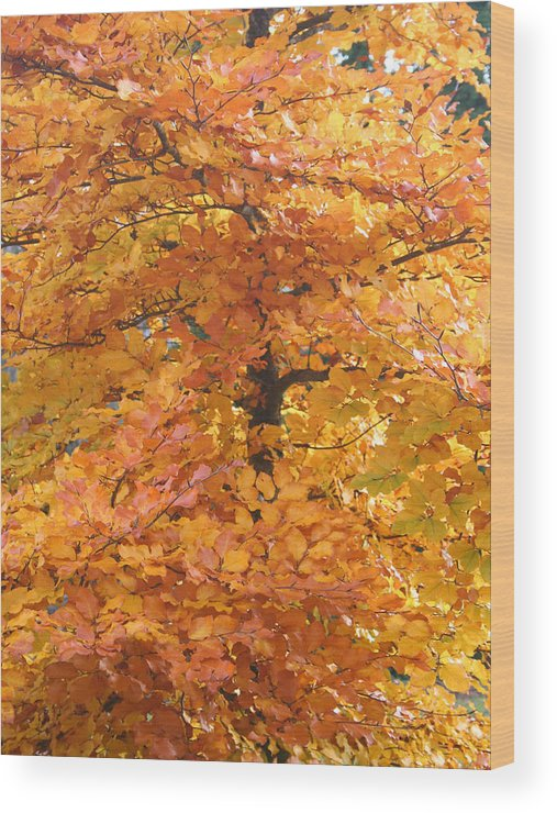 Fall Wood Print featuring the photograph Fall Colors by Mary Gaines