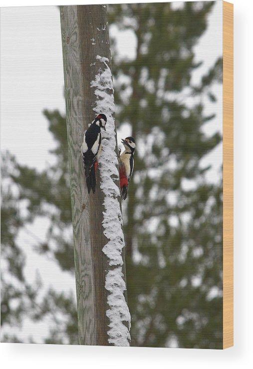 Lehtokukka Wood Print featuring the photograph Family Talk by Jouko Lehto