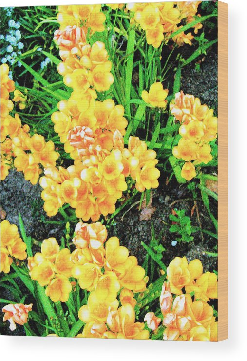 Original Photography Wood Print featuring the photograph Freesias by K Hoover