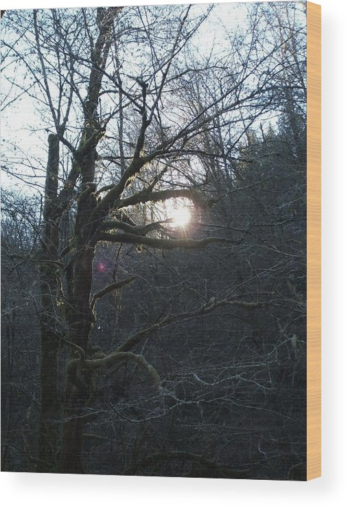 Forest Wood Print featuring the photograph Glimpse Of Hope by Shari Chavira