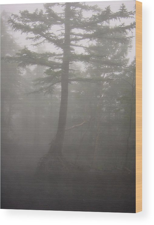 Forrest Wood Print featuring the photograph Haunted Forest by D Turner