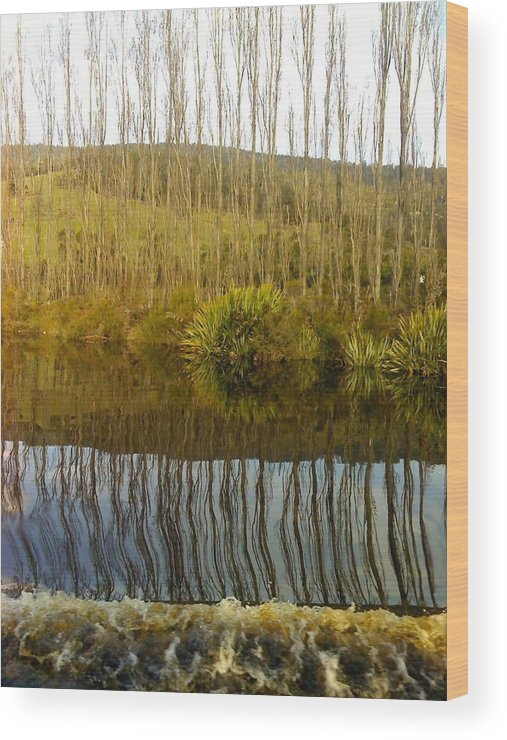 River Reflections Trees Poplars Landscape Wood Print featuring the photograph Huon Poplars by Bethwyn Mills