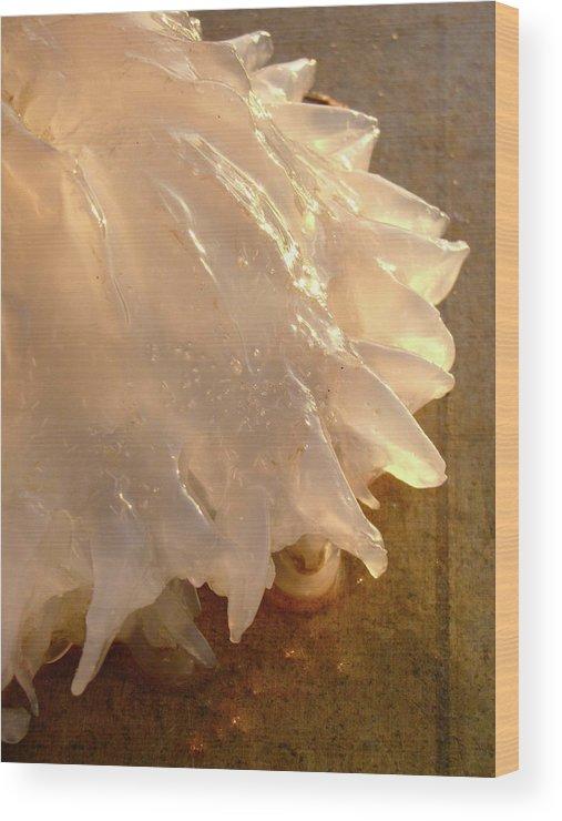 Jellyfish Wood Print featuring the photograph Illuminated Jellyfish by Barbara Palmer