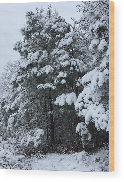Glory Wood Print featuring the photograph Into The Snowy Wood by Kevin Wheeler