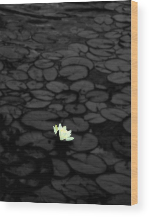Flower Wood Print featuring the photograph Isolation by Roberto Alamino