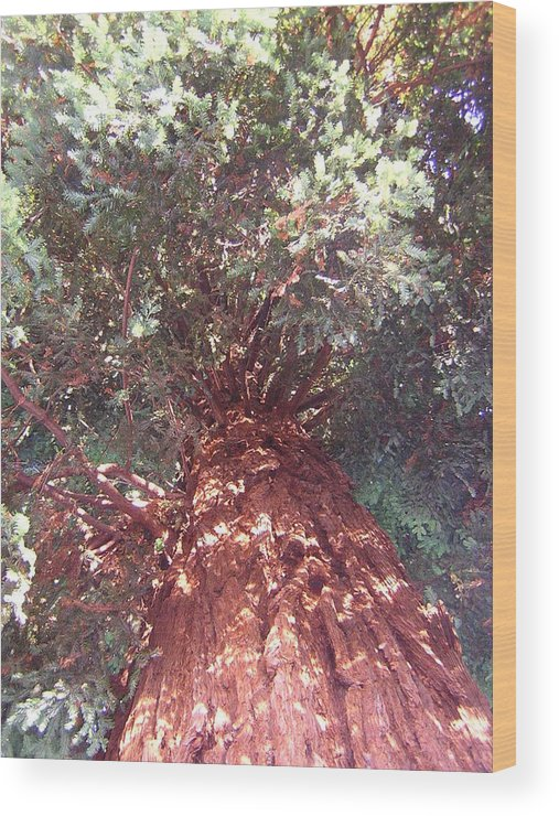Tree Wood Print featuring the photograph Keep Looking Up by Valerie Josi