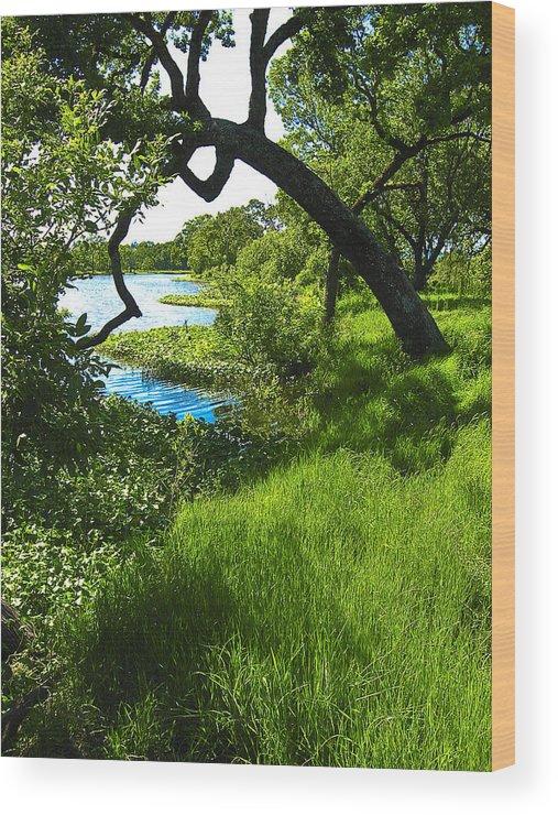 Landscape Wood Print featuring the photograph Laguna De Santa Rosa by John S Lushenko