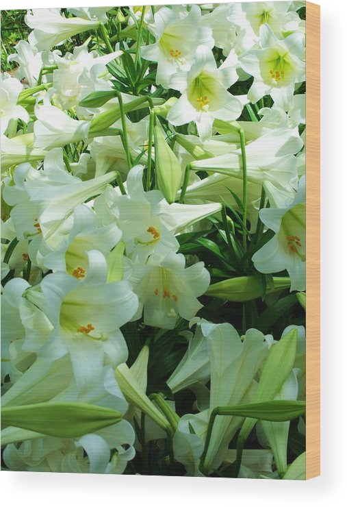 Lily Wood Print featuring the photograph Lilies 11 by Anna Villarreal Garbis