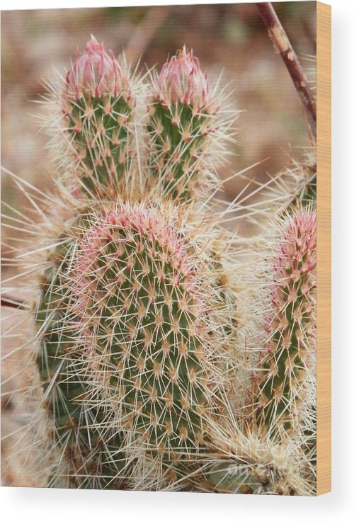 Cactus Wood Print featuring the photograph Linked by L Cecka
