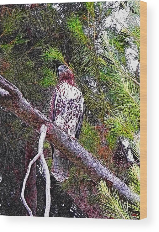 Red Tailed Hawk Wood Print featuring the photograph Looking For Prey - Red Tailed Hawk by Glenn McCarthy Art and Photography