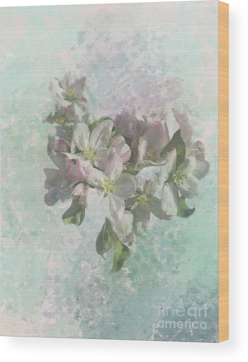 Apple Blossoms Wood Print featuring the photograph Lovely Apple Blossoms by Elisabeth Lucas