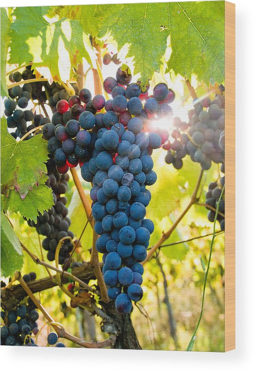 Grapes Wood Print featuring the photograph Luminous Grapes by Jim DeLillo