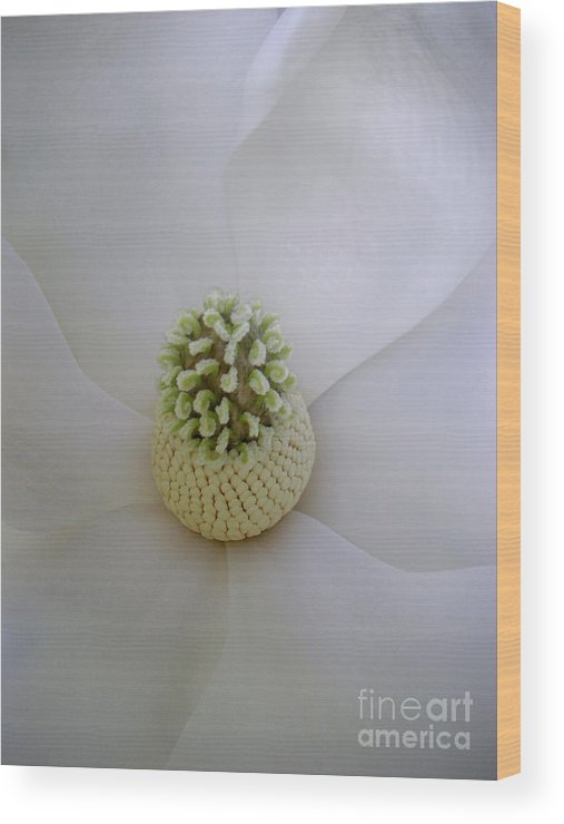 Nature Wood Print featuring the photograph Magnolia In Soft Lines by Lucyna A M Green