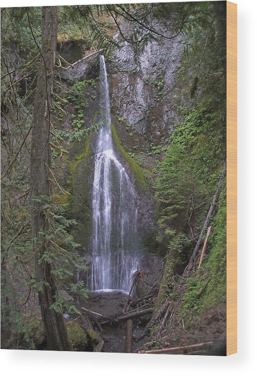 Waterfall Wood Print featuring the photograph Marymere Falls by Gene Ritchhart