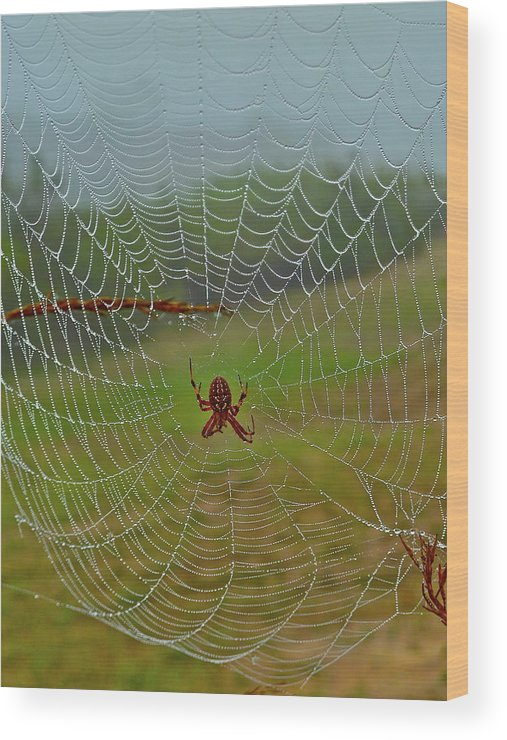 Spider Wood Print featuring the photograph Meadow Macrame by Diana Hatcher