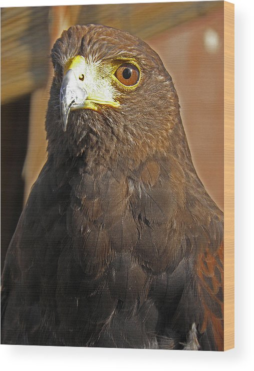 Animal Wood Print featuring the photograph Mighty Hawk by Elizabeth Hoskinson