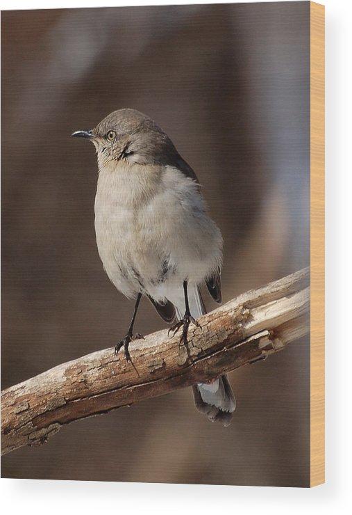 Nature Wood Print featuring the photograph Mockingbird by Edward Loesch