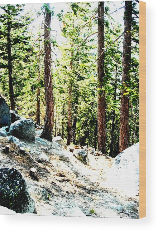 Trees Wood Print featuring the painting Morning Breaks by Tim Tanis