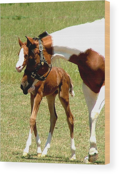 Horse Wood Print featuring the photograph Mother And Newborn by Donna Thomas