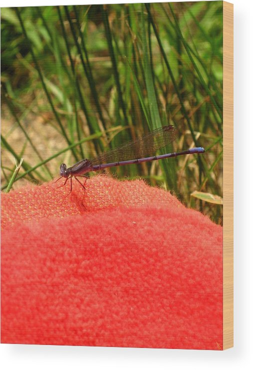 Dragonfly Wood Print featuring the photograph My Purple Friend by Menucha Citron