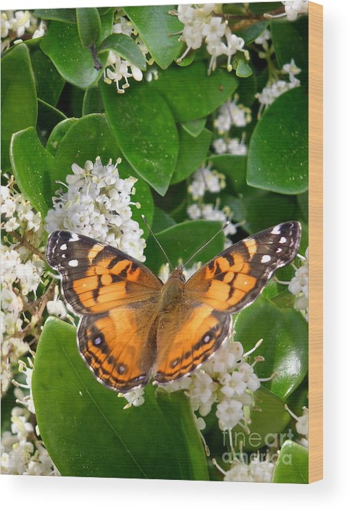 Nature Wood Print featuring the photograph Nature In The Wild - On Golden Wings by Lucyna A M Green