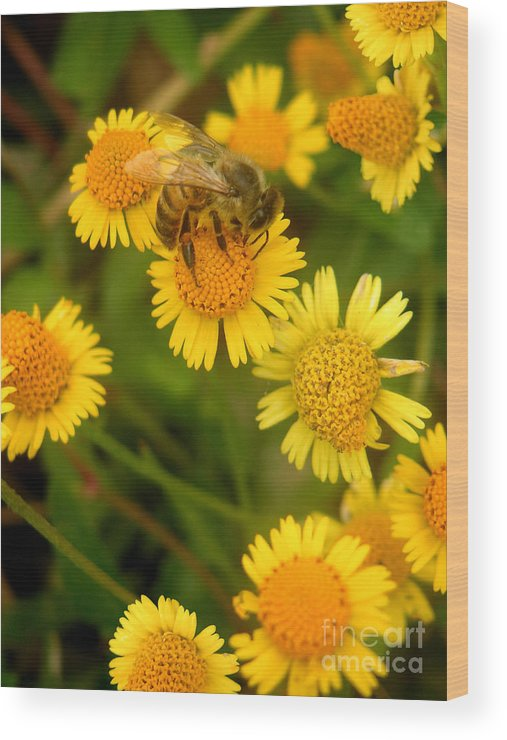 Nature Wood Print featuring the photograph Nature In The Wild - The Nectar Company by Lucyna A M Green