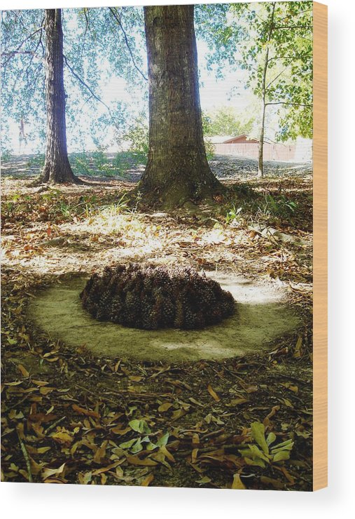 Nature Wood Print featuring the photograph Organize Pinecones by Lizzie Johnson