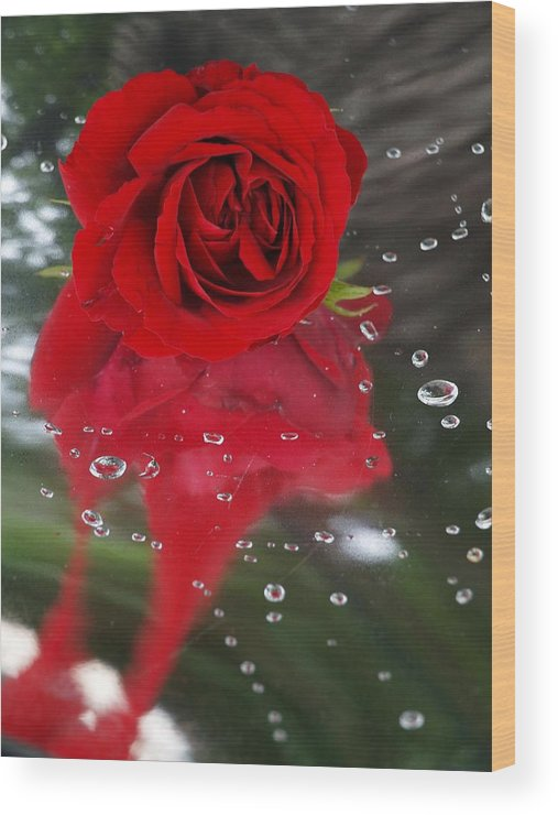 Passion Wood Print featuring the photograph Passion In The Rain by Margareth Osju