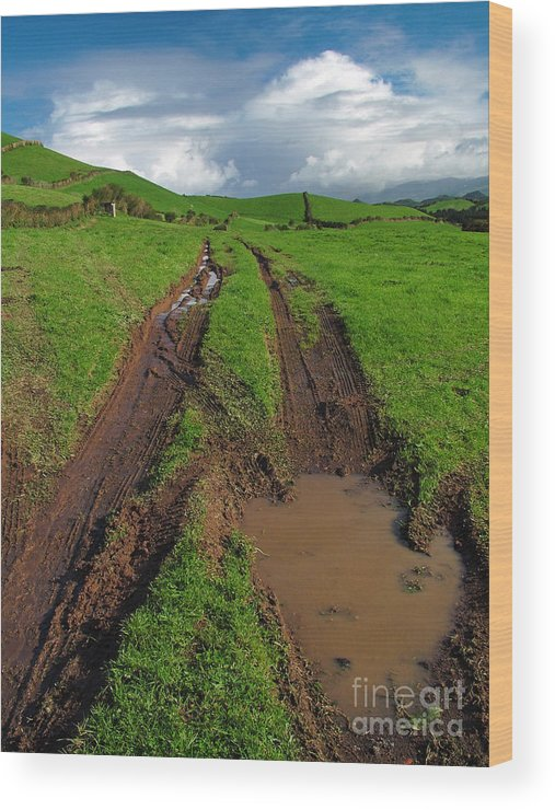 Azores Wood Print featuring the photograph Pasture by Gaspar Avila