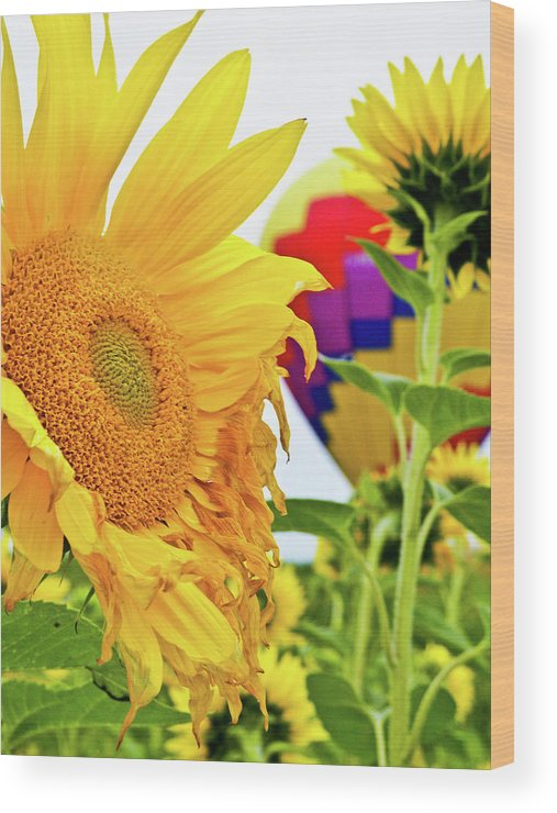 Sunflower Wood Print featuring the photograph Peek A Boo Balloon by Ragina Kakos