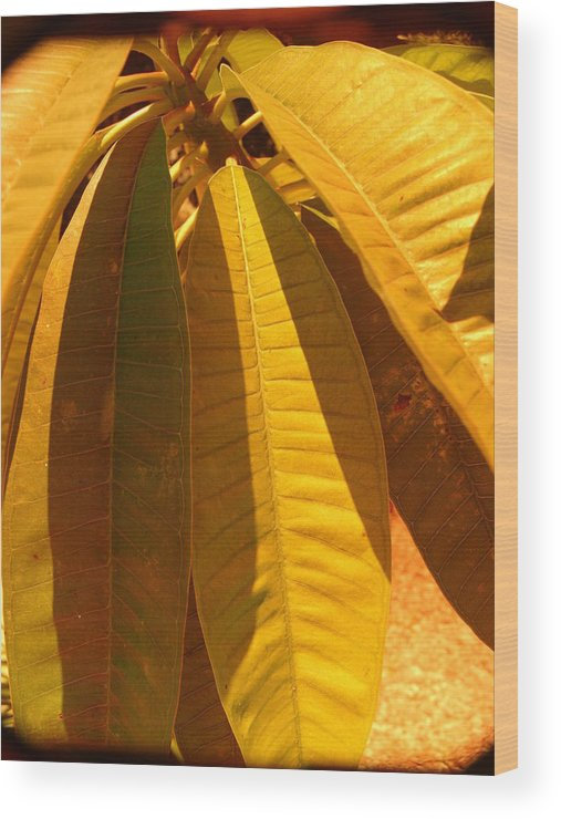 Nature Wood Print featuring the photograph Perfection In Yellow by Florene Welebny