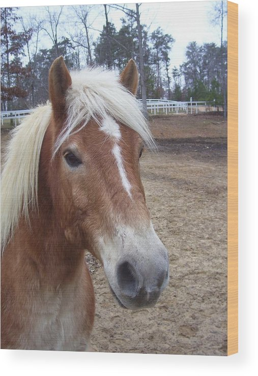 Pony Wood Print featuring the photograph Pony by Kristen Hurley
