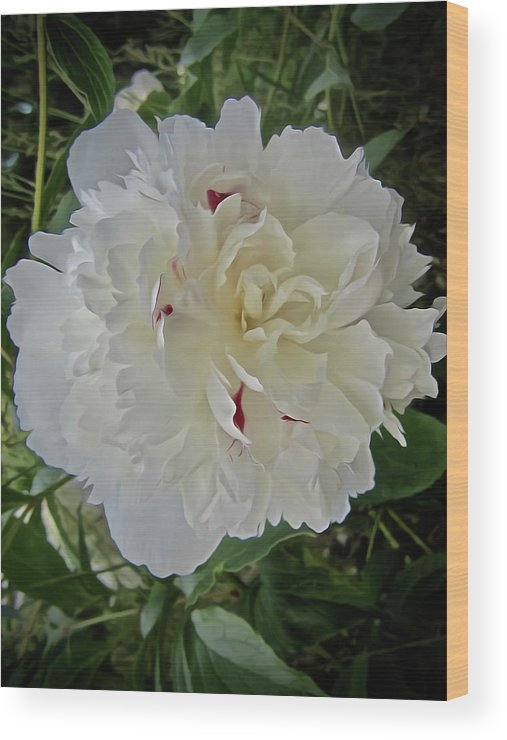 Peony Wood Print featuring the photograph Portrait Of A Peony by Elizabeth Tillar