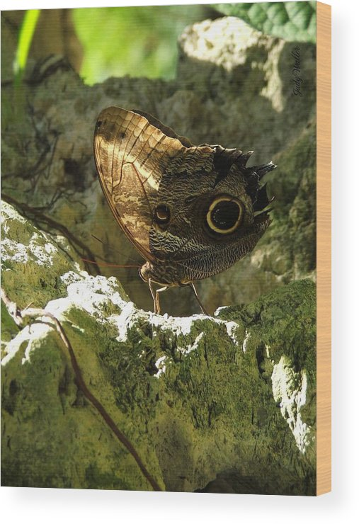 Butterfly Wood Print featuring the photograph Posing In The Light by Judy Waller