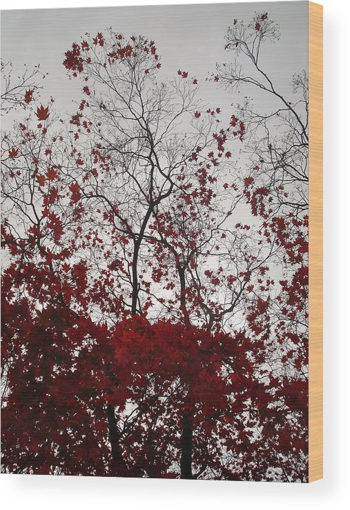 Nature Wood Print featuring the photograph Red Glitter by Nelson F Martinez