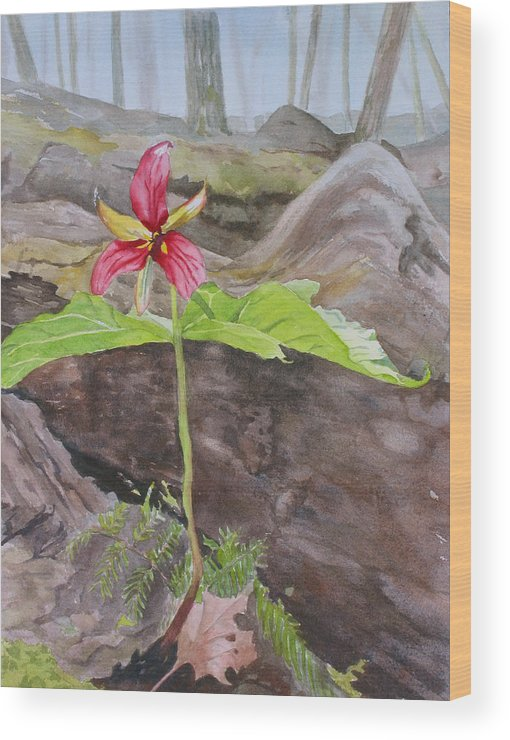Red Trillium Wood Print featuring the painting Red Trillium In The Spring by Debbie Homewood